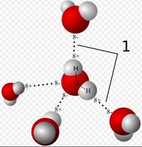 Hidrojen Bağı Su Molekülleri Arasında