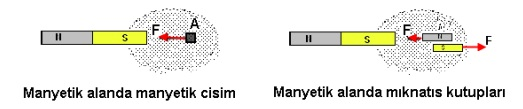 Manyetik Alanda Manyetik Cisim ve Mıknatıs Kutuplar